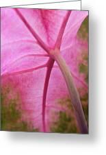 Pink Coleus Greeting Card
