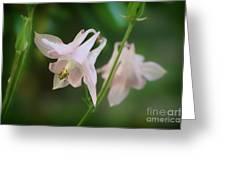 Pink Columbine Greeting Card