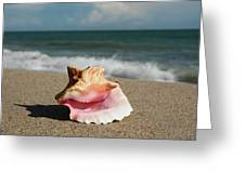 Pink Conch  Greeting Card