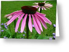 Pink Cone Flowers Greeting Card
