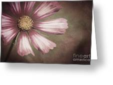 Pink Cosmos Painting Greeting Card