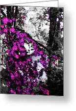 Pink Crape Myrtles Abstract Greeting Card