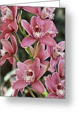 Pink Cymbidium Orchid #3 Greeting Card