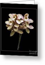 Pink Cymbidium Orchid Greeting Card