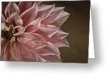 Pink Dahlia In Bloom Greeting Card