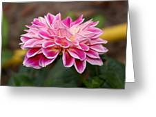 Pink Dahlia Power Greeting Card