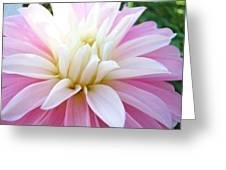 Pink Dahlias Art Dahlia Flowers Giclee Prints Baslee Troutman Greeting Card