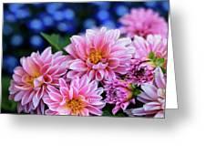 Pink Dahlias On Lobelia Greeting Card