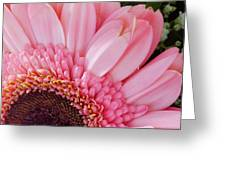Pink Daisy Close-up Greeting Card
