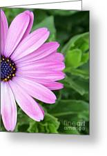 Pink Daisy Greeting Card