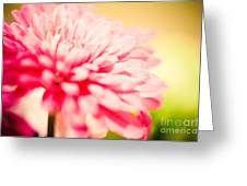 Pink Daisy Subdued Greeting Card