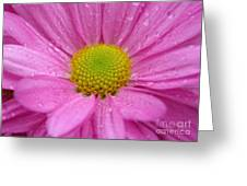 Pink Daisy With Raindrops Greeting Card