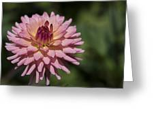 Pink Dalia Greeting Card