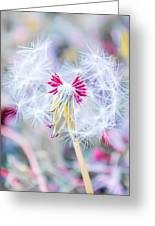 Pink Dandelion Greeting Card