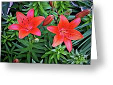 Pink Daylilies Greeting Card