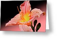 Pink Daylily Greeting Card