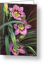 Pink Daylilys Greeting Card