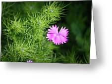 Pink Dianthus With Nigella Buds Greeting Card