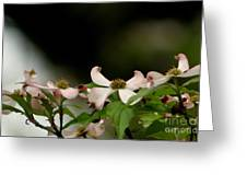New Orleans Pink Dogwood Equinox Greeting Card
