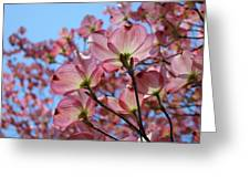 Pink Dogwood Flowers Landscape 11 Blue Sky Botanical Artwork Baslee Troutman Greeting Card
