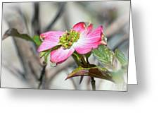 Pink Dogwood Greeting Card by Kerri Farley
