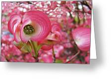 Pink Dogwood Tree Flowers Dogwood Flowers Giclee Art Prints Baslee Troutman Greeting Card