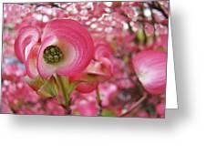 Pink Dogwood Tree Flowers Dogwood Flowers Giclee Art Prints Baslee Troutman Greeting Card