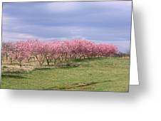 Pink Pear Trees Greeting Card