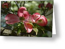 Pink Dogwoods Greeting Card