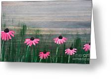 Pink Echinacea Greeting Card