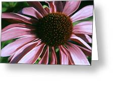 Pink Echinacea Greeting Card