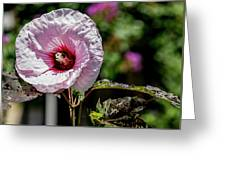 Pink Echo Greeting Card