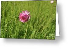 Pink Everlasting Greeting Card