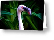 Pink Flamingo Bliss Greeting Card