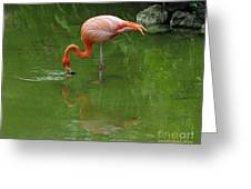 Pink Flamingo Greeting Card by Cindy Lee Longhini