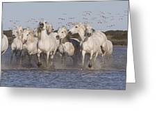 Pink Flamingoes And White Horses Greeting Card