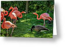 Pink Flamingos And Imposters Greeting Card