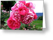 Pink Floribunda Roses Greeting Card