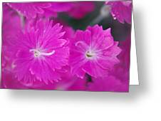 Pink Flower Closeup Greeting Card