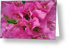 Pink Flower Composition Greeting Card