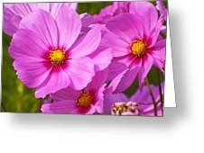 Pink Flower Conspirisy Greeting Card