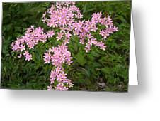 Pink Flower Cross Greeting Card