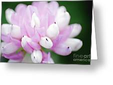 Pink Flower Greeting Card