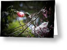 Pink Flower Hummie Greeting Card