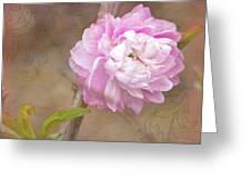 Dwarf Flowering Almond Romantic Floral Greeting Card