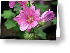 Pink Flower With Bug. Greeting Card