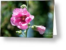 Pink Flower Greeting Card by Yew Kwang