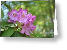 Pink Flowering Rhododendron Bush In Full Bloom Greeting Card