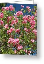 Pink Flowering Shrub Greeting Card
