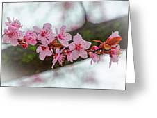 Pink Flowering Tree - Crabapple With Drops Greeting Card